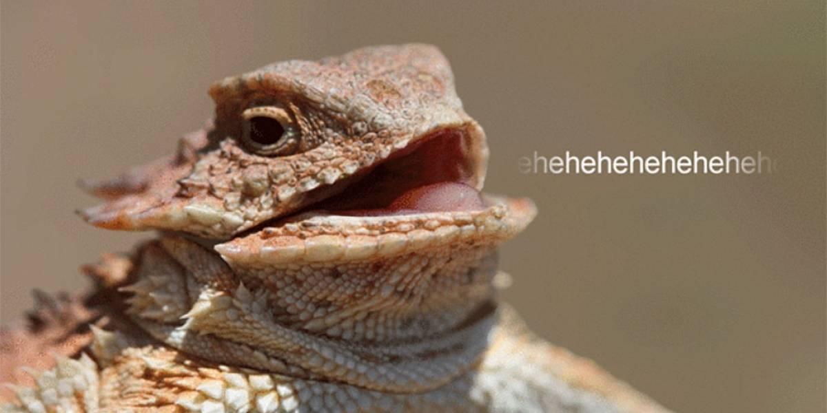 Hackean Lizard Stresser, el servicio de ataques DDoS de Lizard Squad