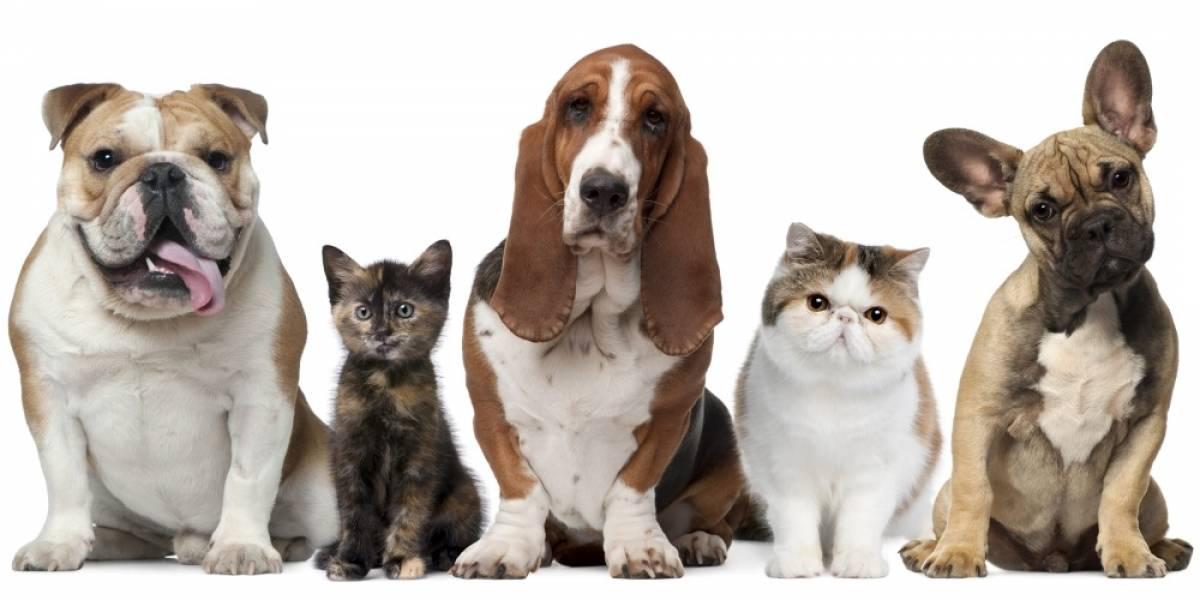 Sorteamos comida para tu mascota con el auspicio de NerDog.cl