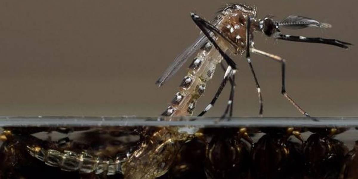 Millones de mosquitos modificados genéticamente podrían ser liberados en EE.UU.
