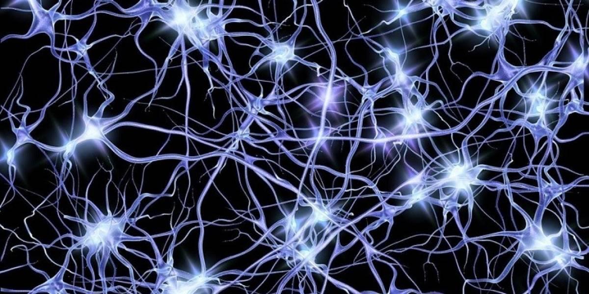 Red de neuronas artificiales aprende a reproducir el contenido de tu cerebro