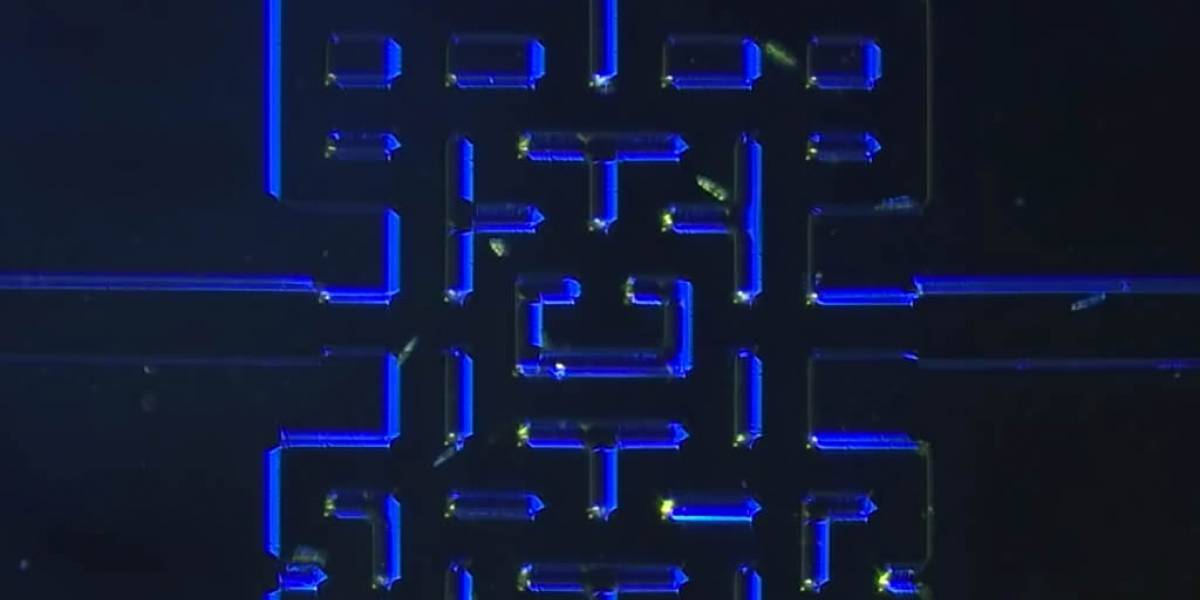 Desarrollan una versión microscópica de Pac-Man con microorganismos
