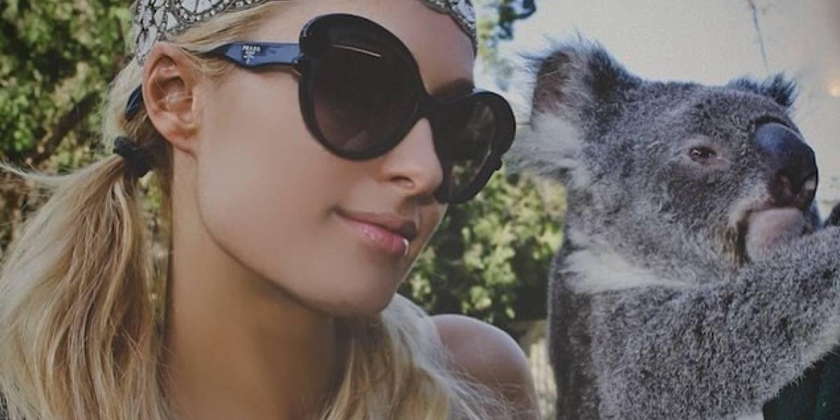 Instagram busca prevenir el maltrato animal con aviso a sus usuarios