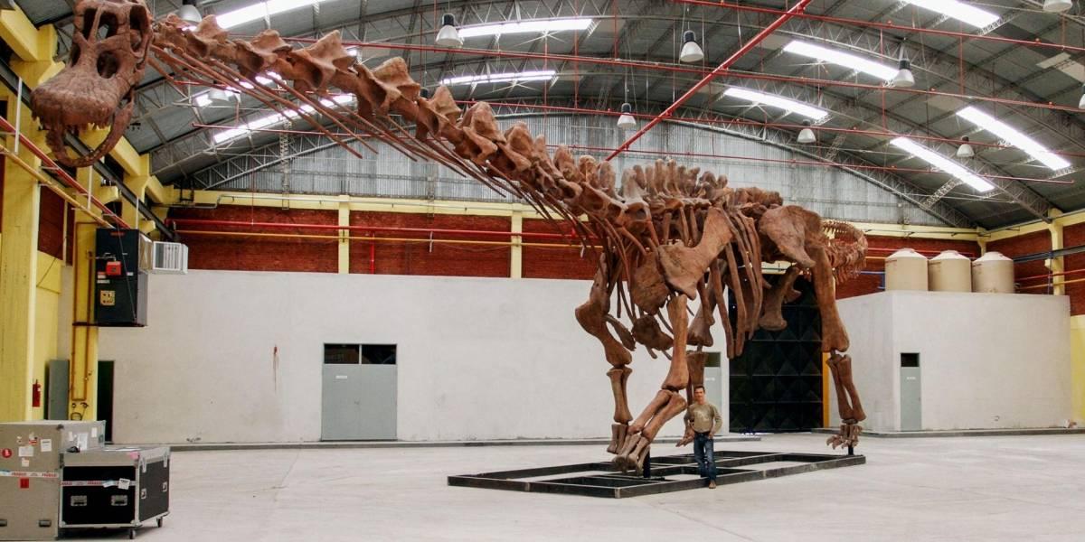 Este dinosaurio encontrado en Argentina es el ser vivo más grande de la historia