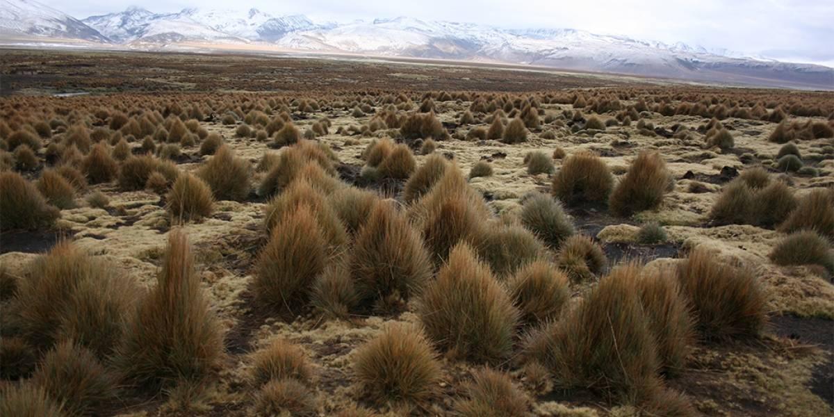 Físicos chilenos y europeos lograron predecir desarrollo de plantas matemáticamente
