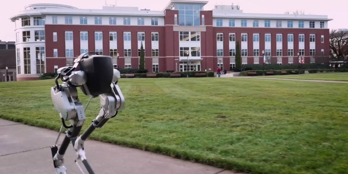 Crean robot que camina como pollo, pero es tremendamente eficiente