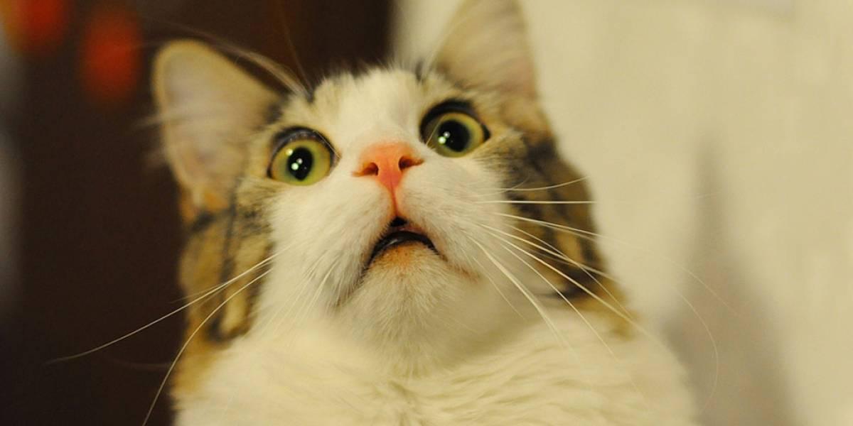 Adiós productividad: crean sitio que transforma cualquier dibujo en gatos
