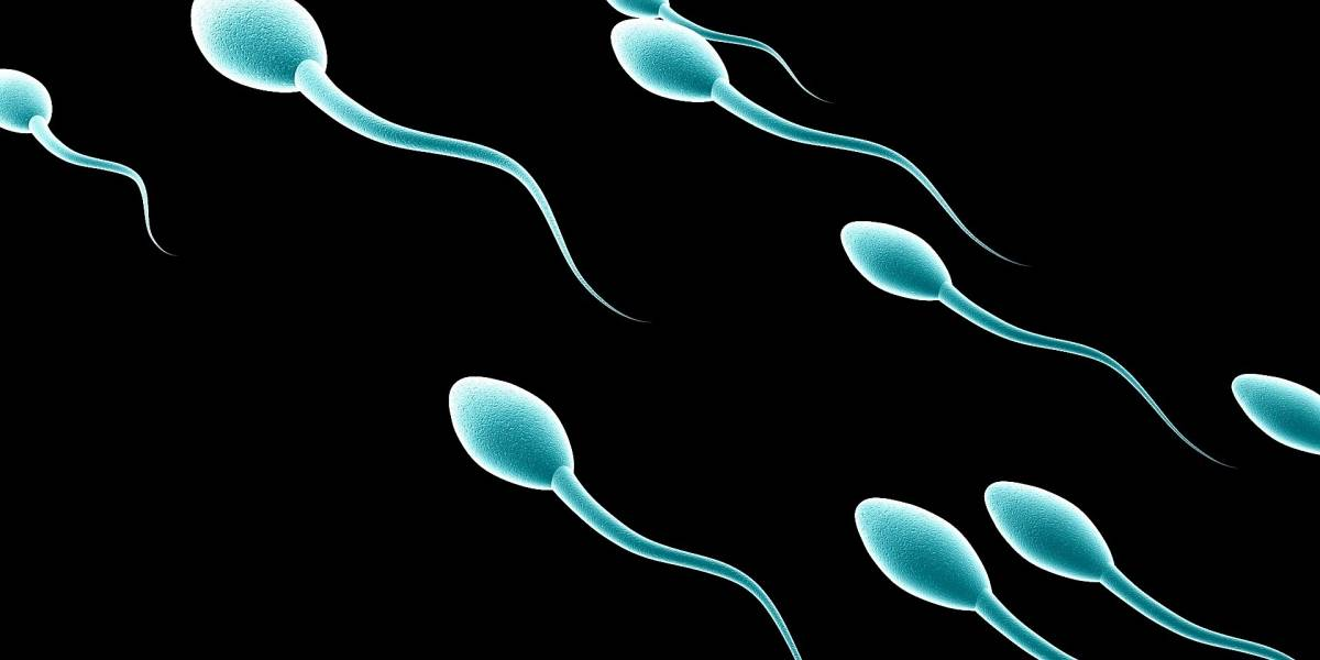 Investigadores consiguen gran avance en la creación de espermatozoides humanos