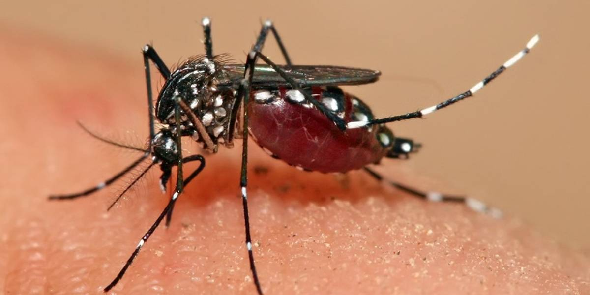 Las primeras vacunas contra el Zika se comenzarán a probar pronto en humanos
