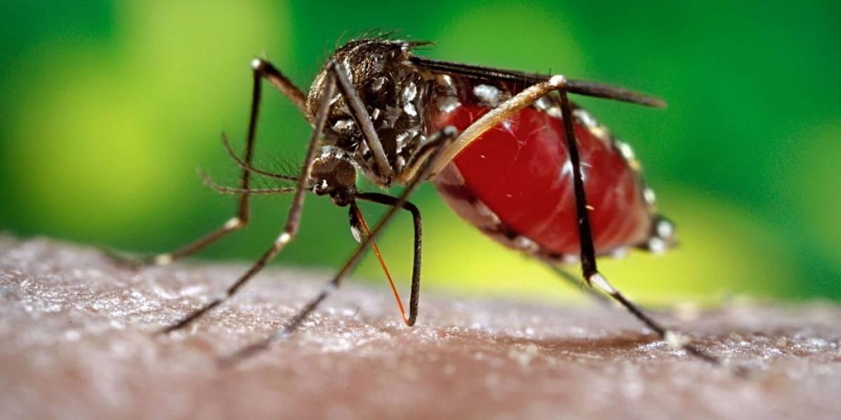 Primera vez en décadas que se encuentra al mosquito que transmite Zika en Chile