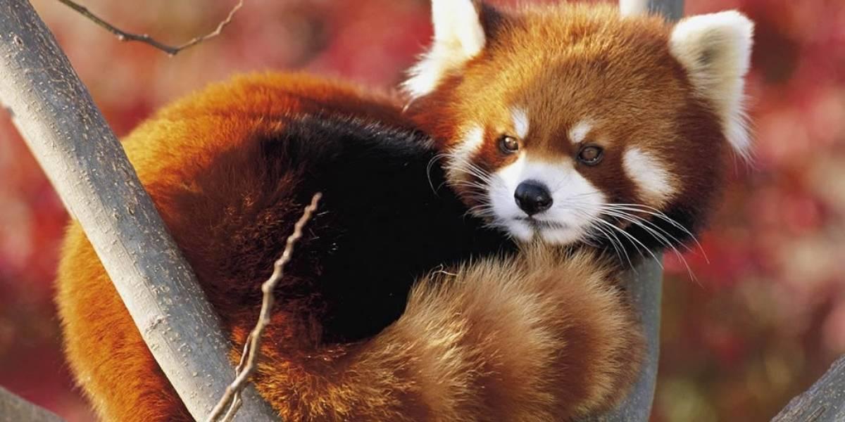 Mozilla rediseña la página para descubrir complementos de Firefox