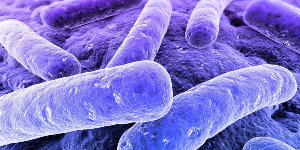 Cientificos quieren usar el crowdsourcing para descubrir nuevos antibióticos