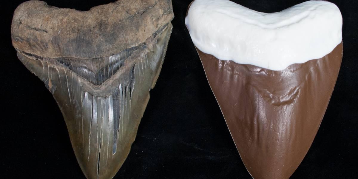 Un diente de megalodón hecho de chocolate