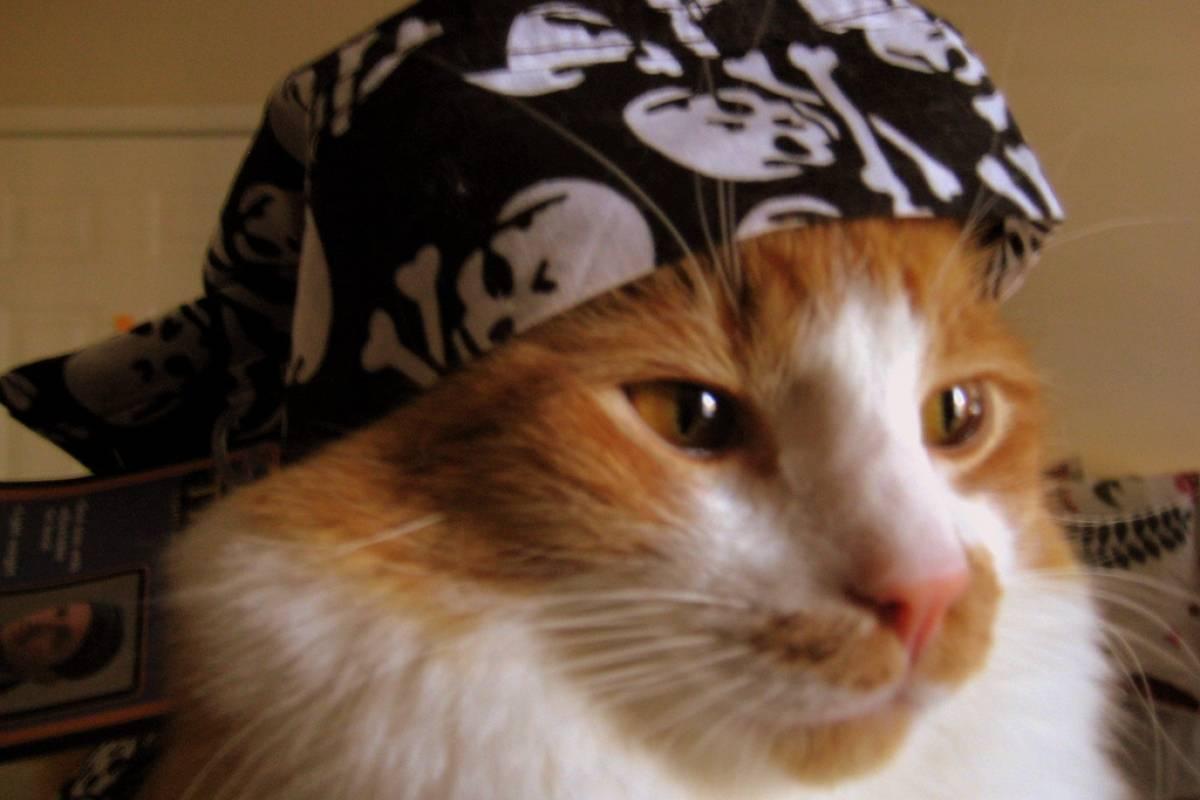 The Pirate Bay regresa con un nuevo dominio