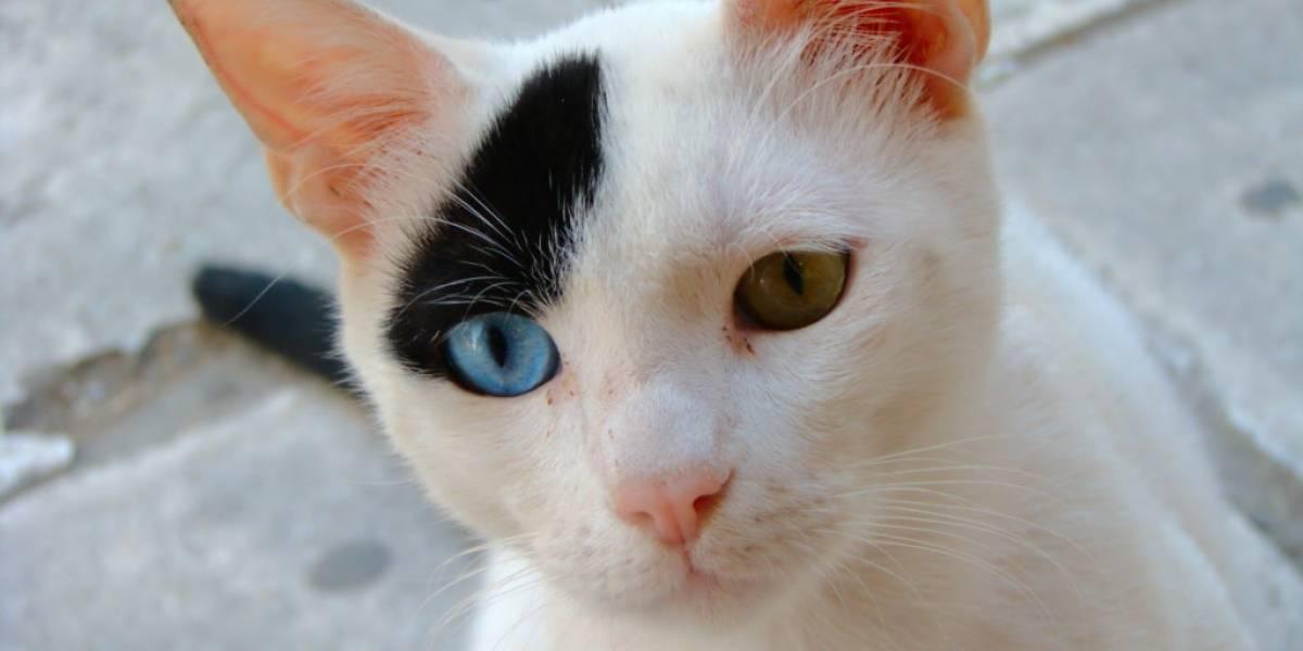 Encuentran en China la evidencia más antigua de domesticación de los gatos