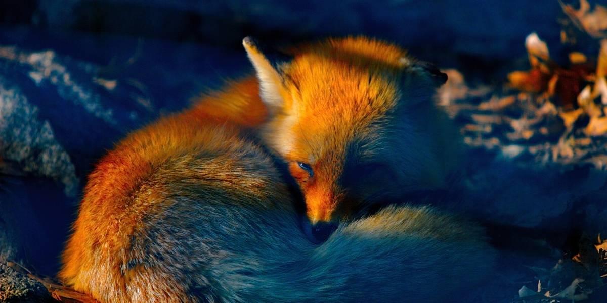 Mozilla investiga por qué Dell cobra £16,25 en el Reino Unido por instalar Firefox