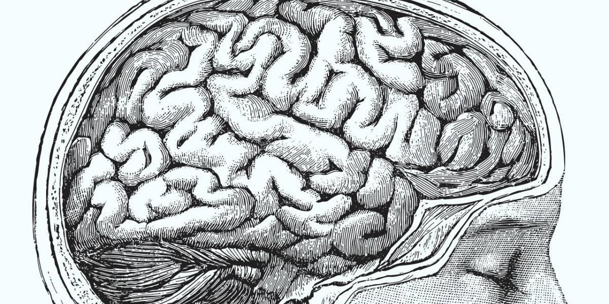 Descubren primer caso de un paciente vivo sin cerebelo