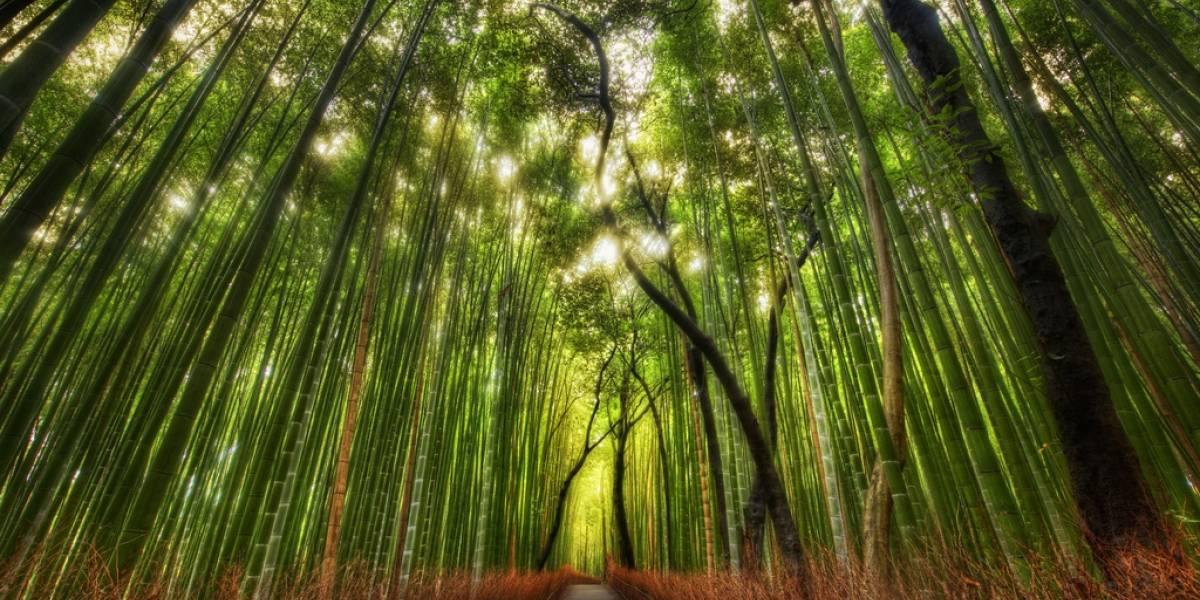 Este simulador forestal puede predecir el cambio climático del mundo