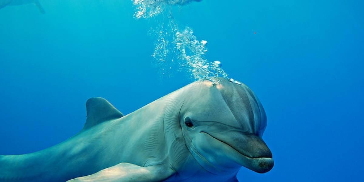 Inventan detector de bombas inspirado en el sonido de los delfines