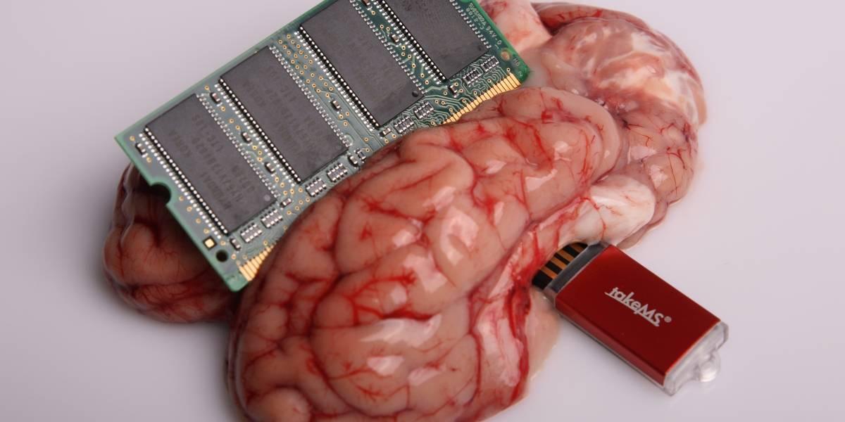 IBM busca crear la próxima generación de bioprocesadores inspirado en el cerebro