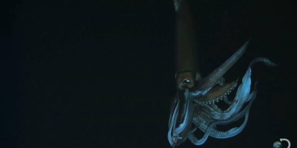 Cómo los calamares pueden mejorar la impresión en 3D