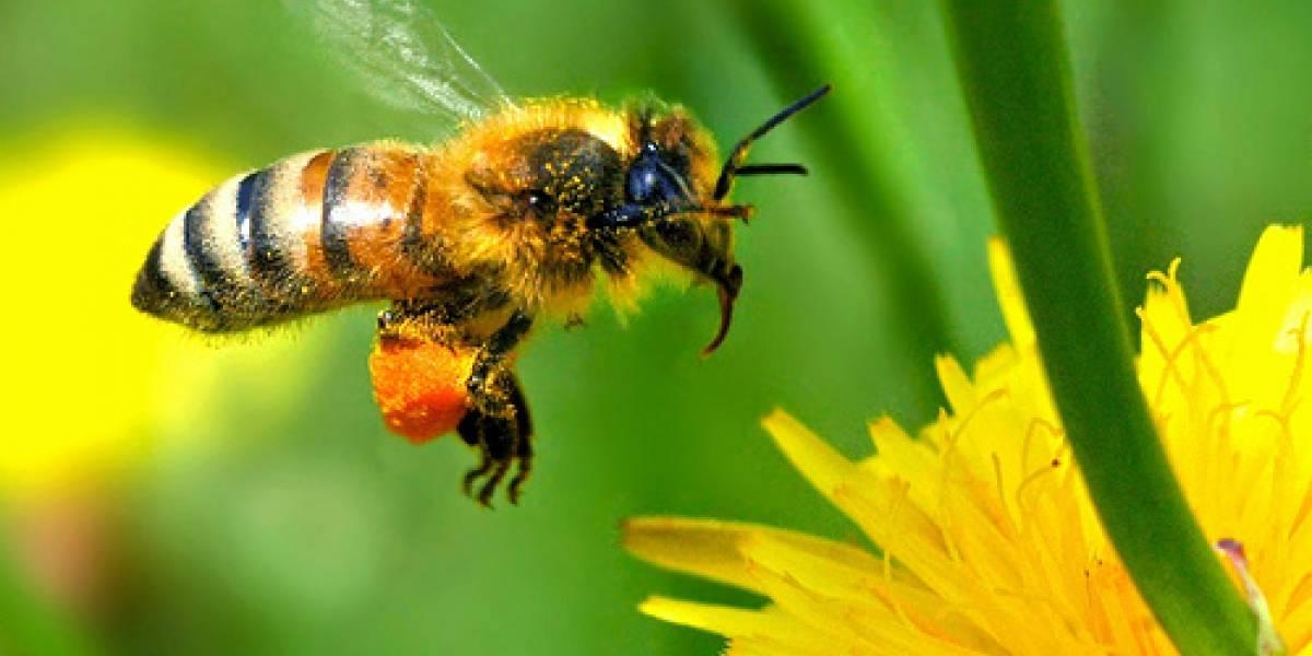 Científicos encuentran en Chile un tipo de miel única en el mundo la cual tendría excelente calidad
