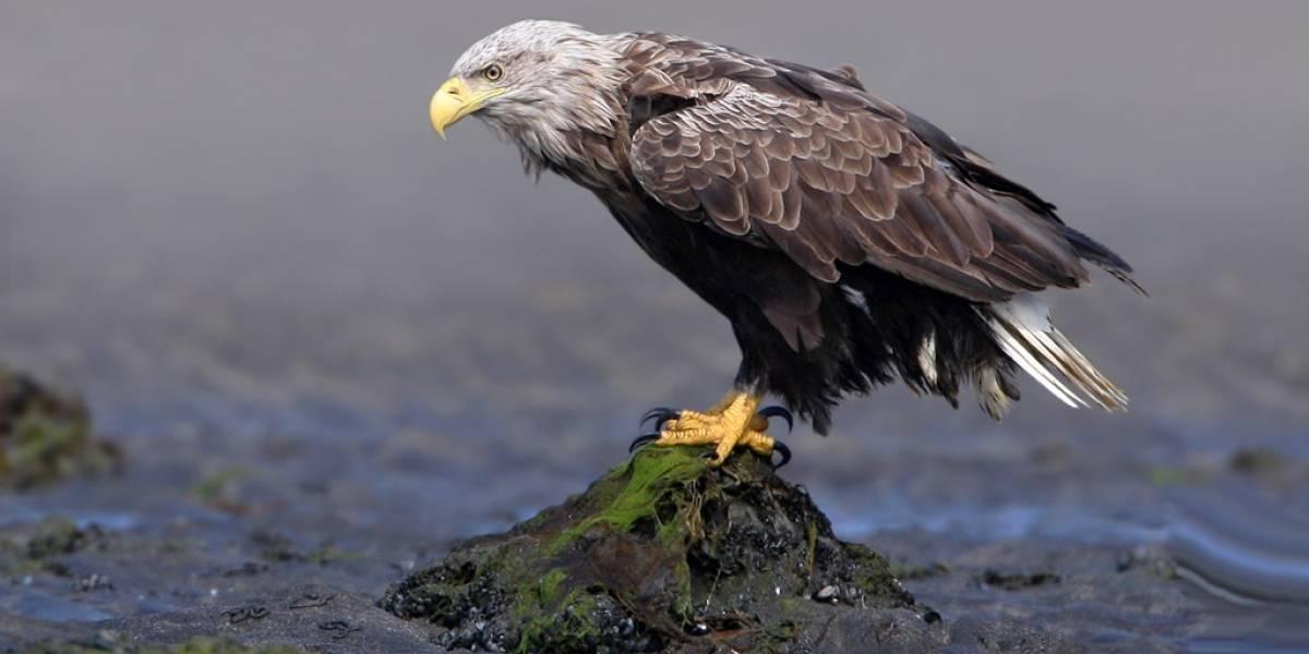 Mirada de águila en París con una Sony Action Cam Mini