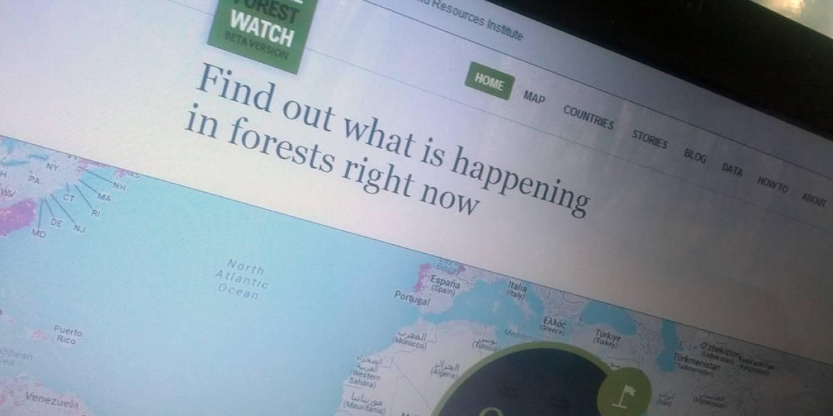 Mapa de Google rastrea la deforestación en tiempo real
