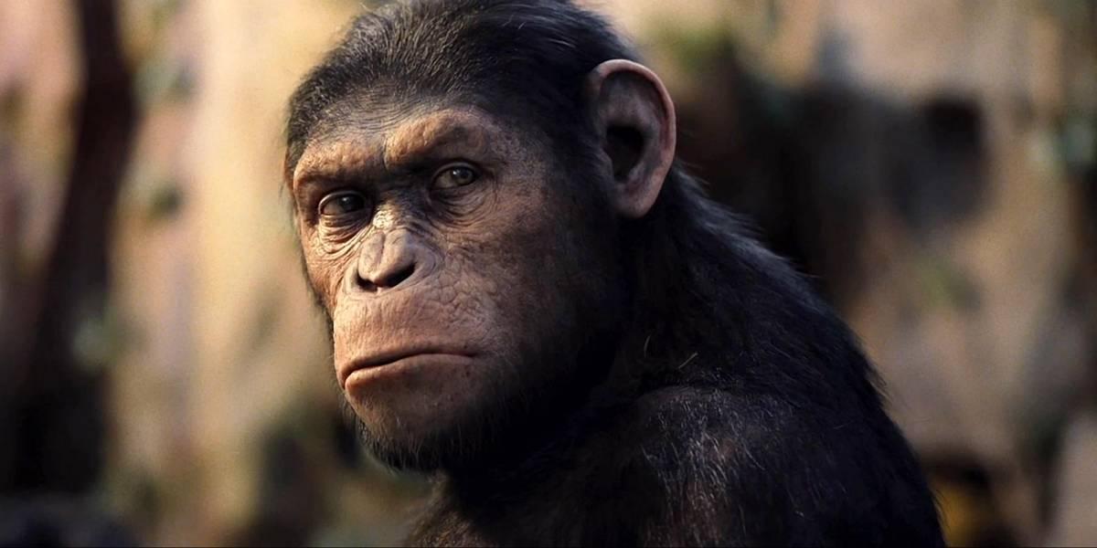 Irán asegura que envió un mono al espacio