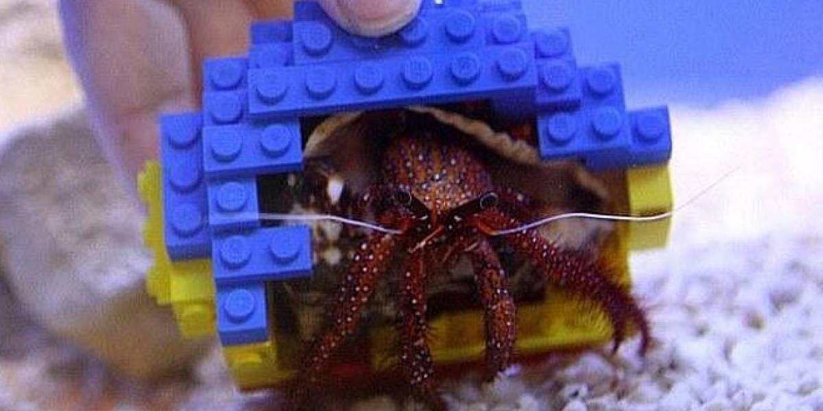 Imperdible: Un cangrejo ermitaño adopta una concha hecha de bloques Lego