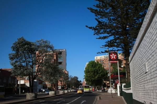 árboles en Bogotá