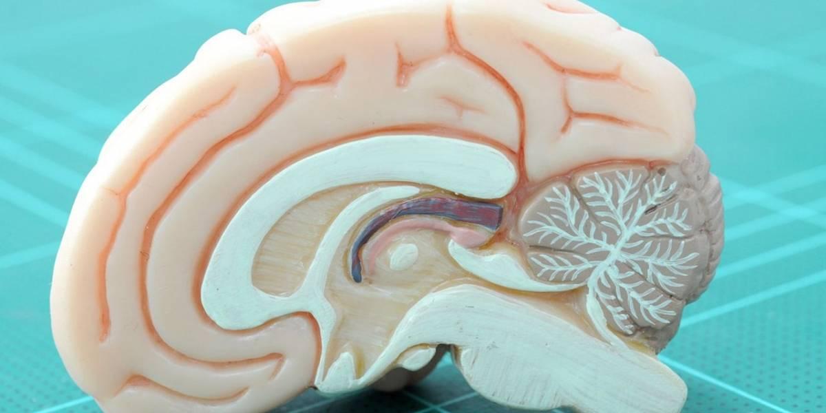 Usar varios dispositivos al mismo tiempo podría estar afectando nuestro cerebro
