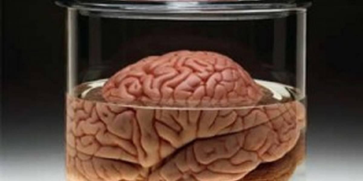 Investigadores europeos quieren simular el cerebro humano con un 'supercomputador'