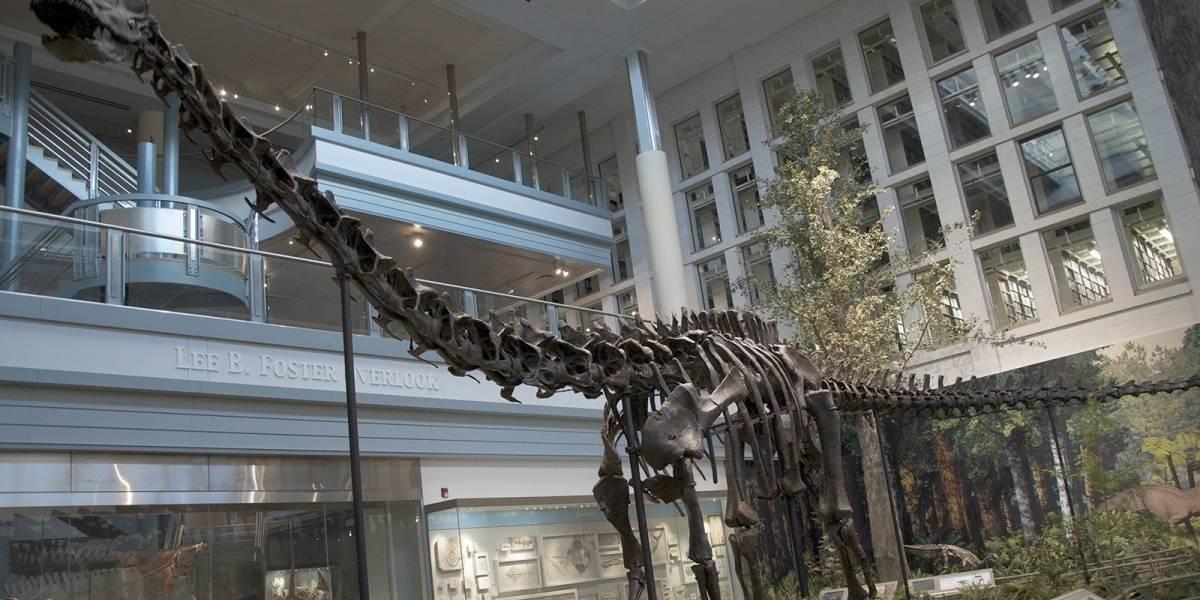 Hallan en Argentina un dinosaurio 7 veces más grande que el T-Rex
