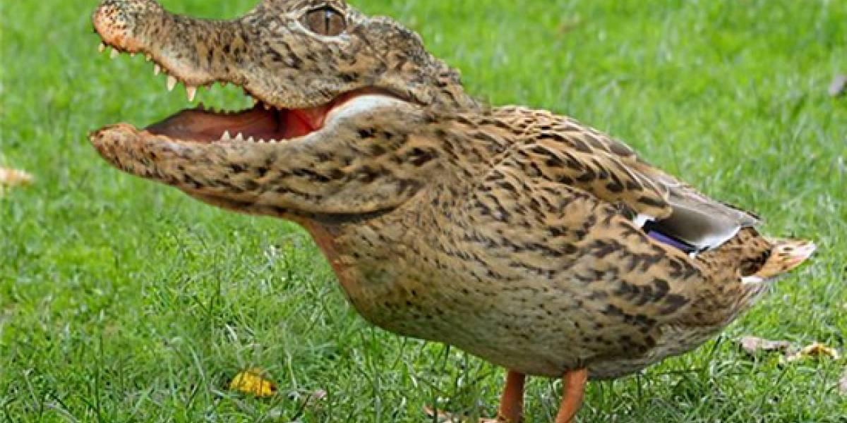 Científicos hacen retroceder la evolución de los pollos a la prehistoria