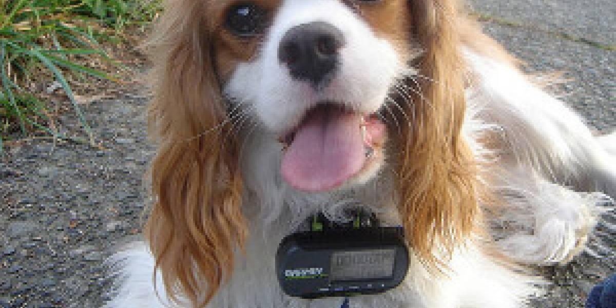 Fuerza Aérea: El sistema GPS no se encuentra en peligro