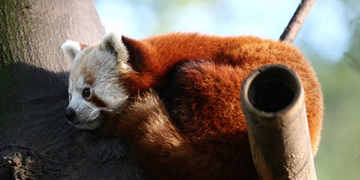 """Firefox 7 ya está disponible y viene con """"telemetría"""""""