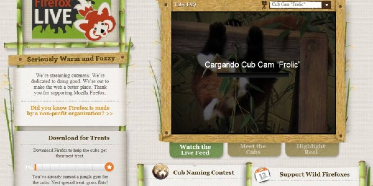 Fundación Mozilla adopta dos pequeños pandas rojos