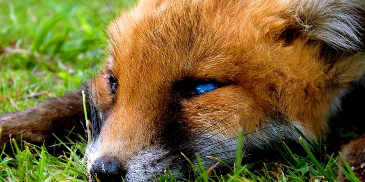 Más de la cuarta parte de usuarios Firefox no usa complementos