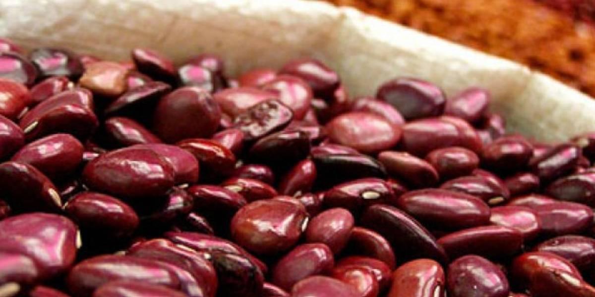 México: Decodifican el genoma del frijol