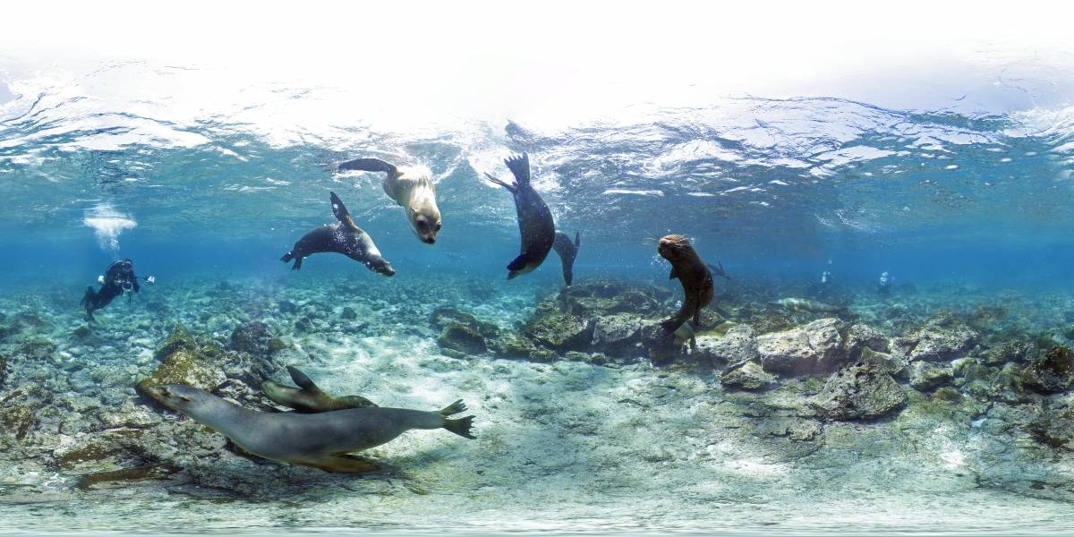 Sumérgete en la Gran Barrera de Coral desde tu casa