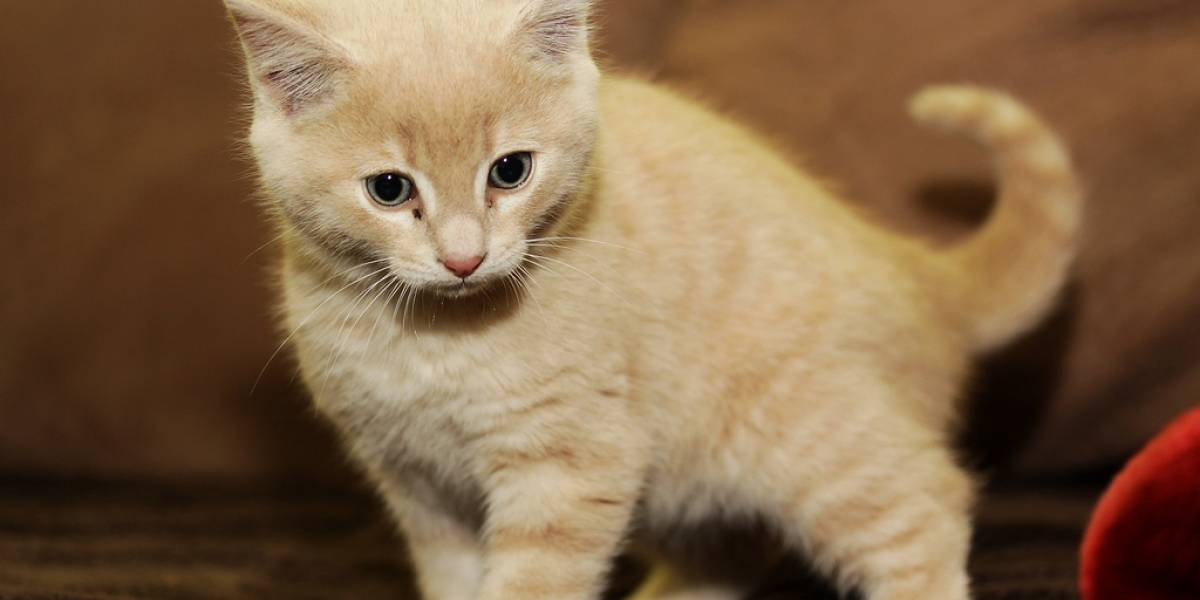 Empresa ofrece entrenar empleados usando gatitos por e-mail para que eviten el phishing