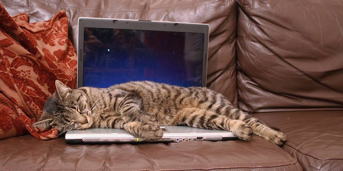 """Usuarios alegan que un modelo de Dell """"huele a pipí de gato"""""""