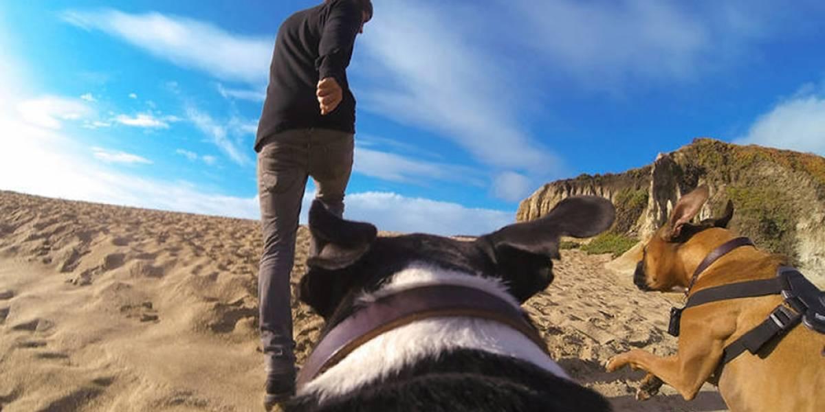 GoPro Fetch: Graba todo lo que ve tu perro