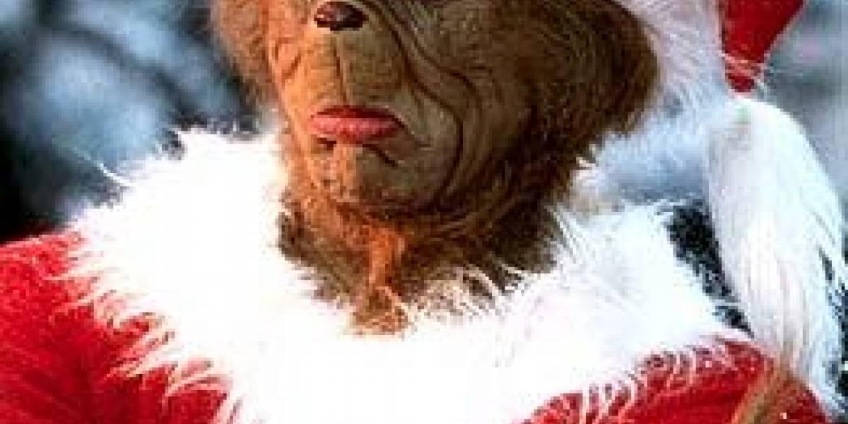 """Las 12 """"ciberestafas"""" más comunes en época navideña"""
