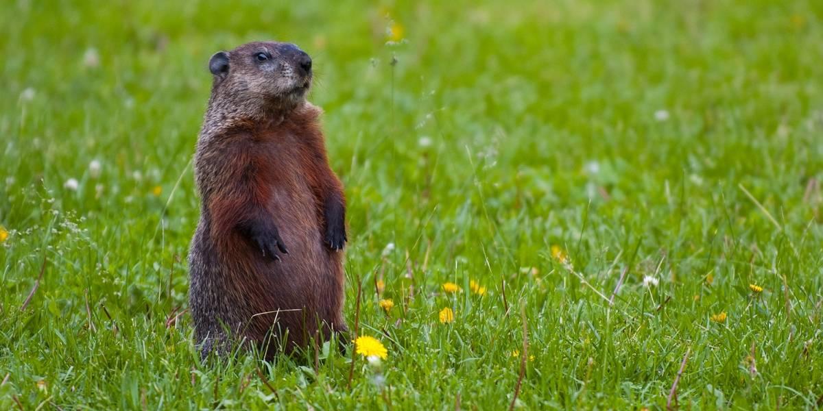 ¡Feliz día de la marmota!