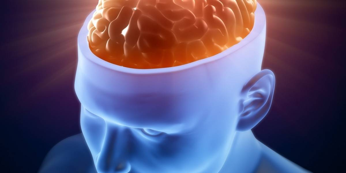 Neurocientíficos cuestionan megaproyecto de simulación del cerebro humano