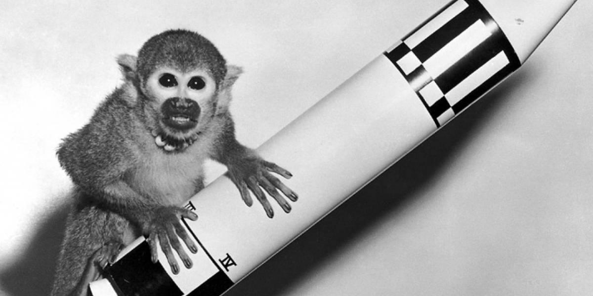 Irán manda otro mono al espacio