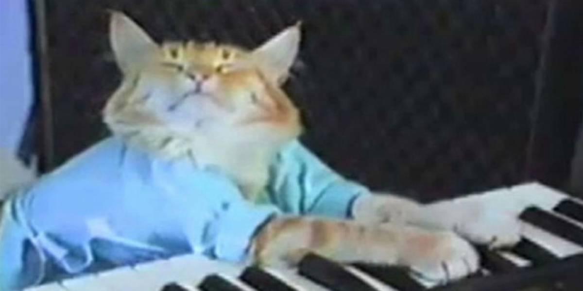 Google X crea una red de computadores que aprendió a reconocer gatos sin que le enseñaran