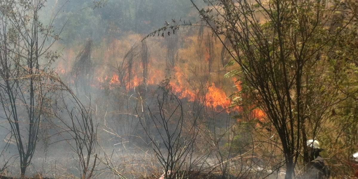 Incendio forestal mantuvo al sur de Chile sin Internet durante varias horas