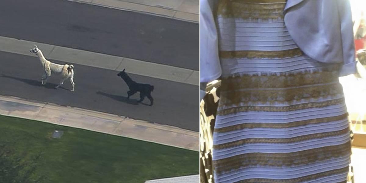 Llamas y vestidos azules: ¿por qué necesitamos estar en las grandes discusiones?